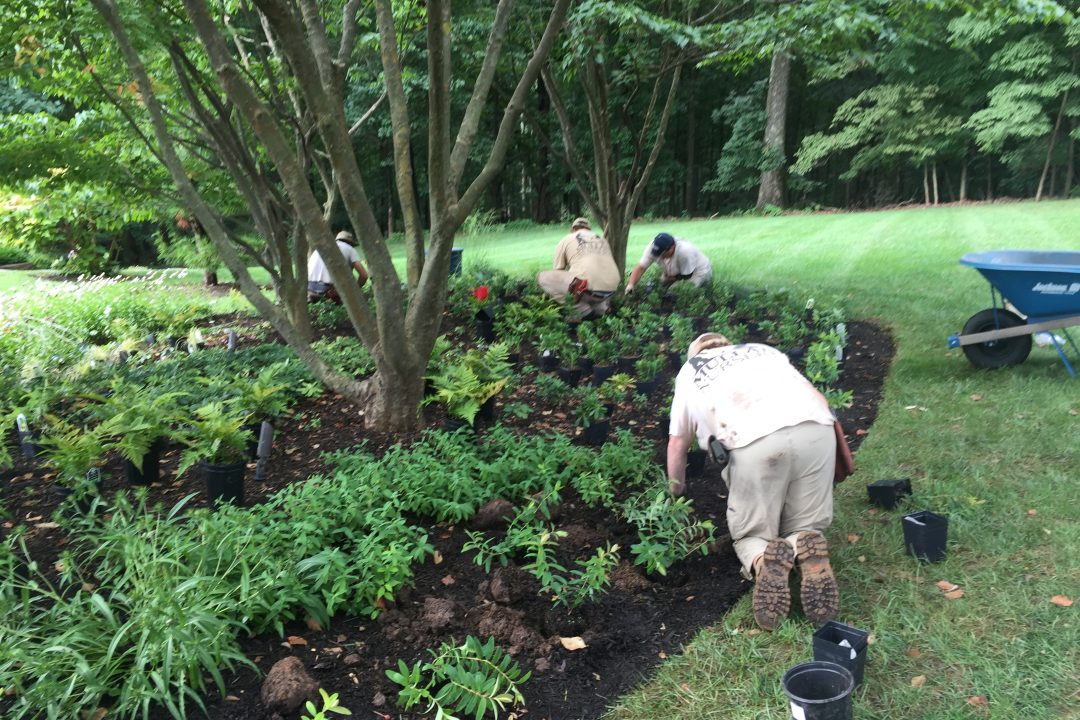 landscaper placing mulch flower bed