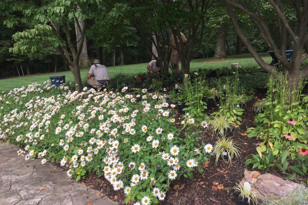 landscape maintenance weeding & Pruning