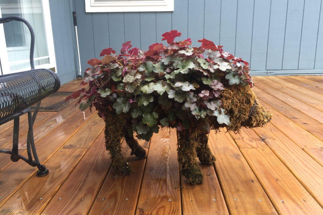 pig topiary landscape decoration