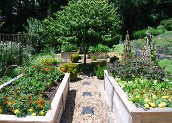raised cedar vegetable beds 22 inch height