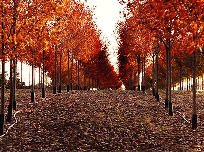 port_trees-1