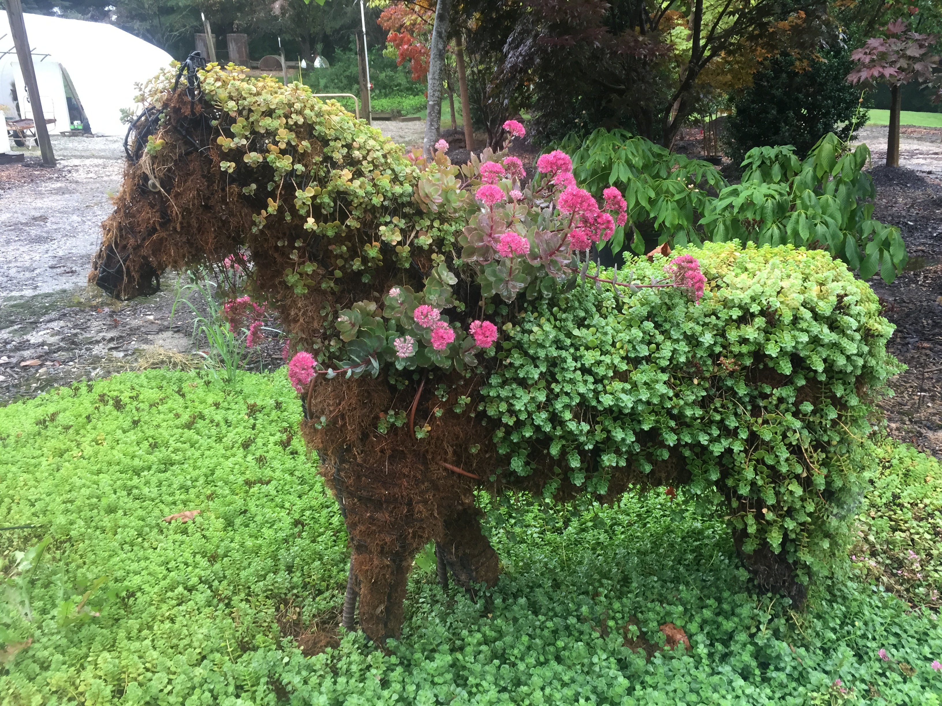 custom horse topiary flower