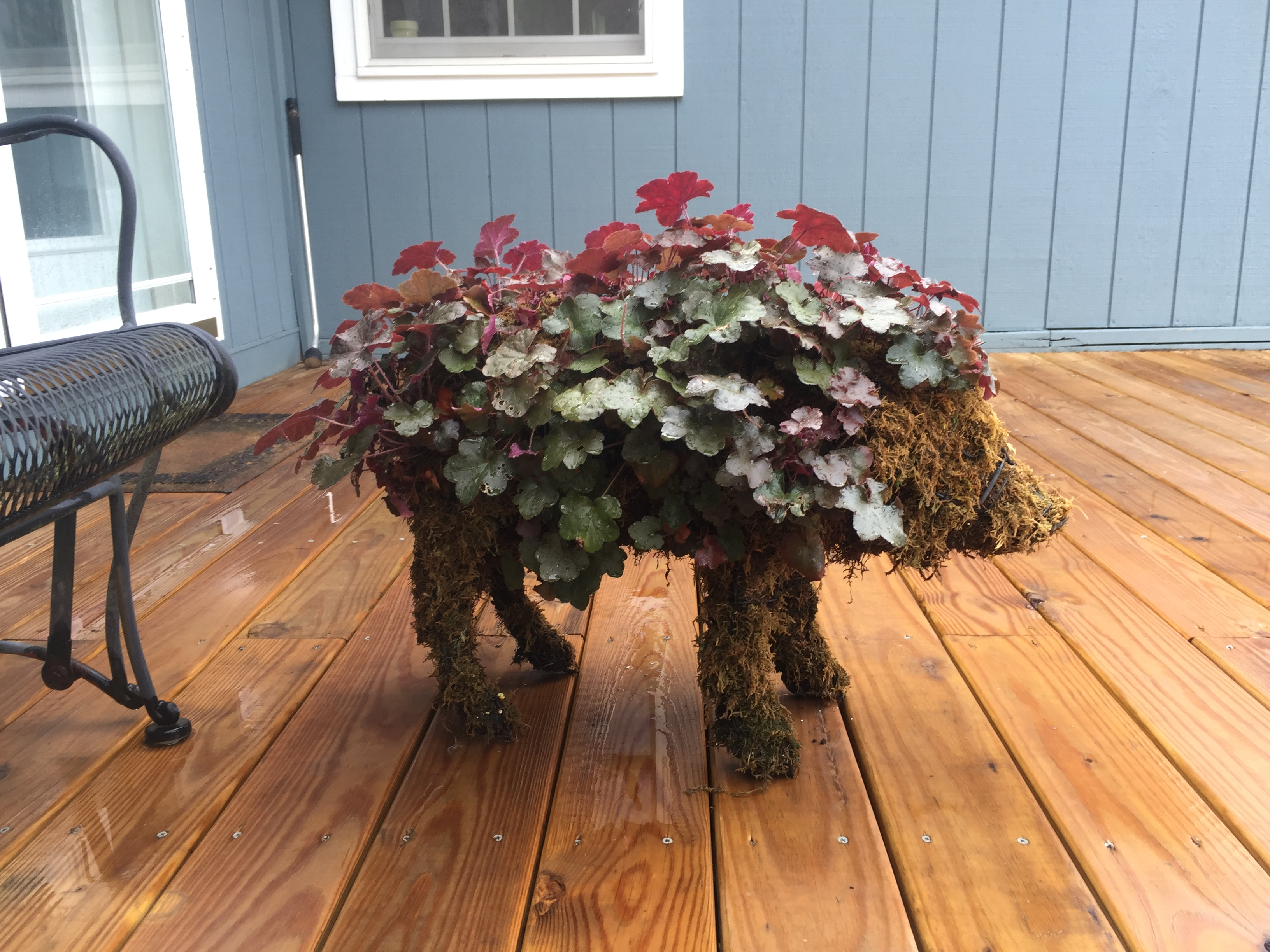 pig topiary landscape decoration