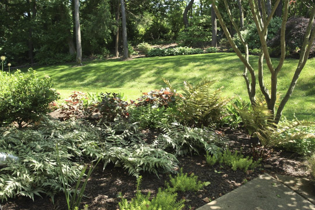 perennial fern flower bed shaded area