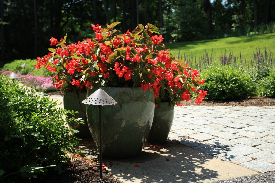 container pots flowers