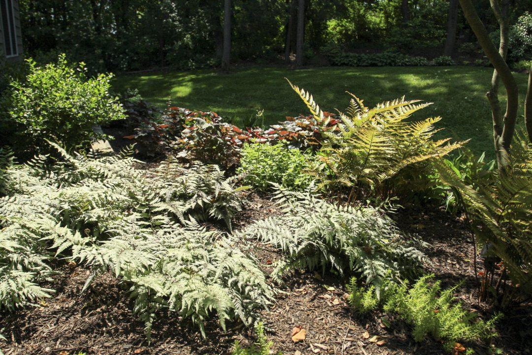perennial flower bed | ferns